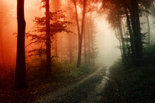 Road Through Dary Mysterious W...