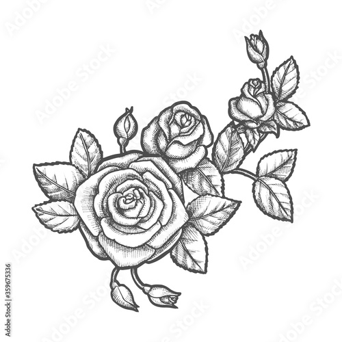 Tattoo with rose flower. Sketch of plant. #359675336