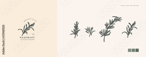 Fotografija Vector illustration rosemary branch - vintage engraved style