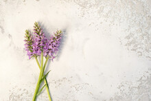 Orchis, Terrestrial Orchids On...