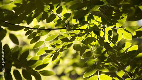 Fotografija foglie