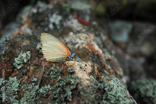 Butterfly resting on a rock