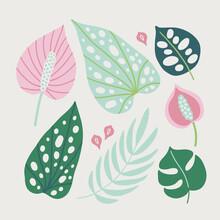 Set Of Tropical Leaves - Palm, Calla, Monstera, Caladium