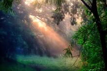 Foggy Morning Sunshine Penetra...