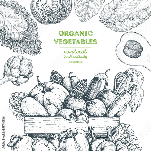 Harvest of vegetables in the basket. Hand drawn vector illustration with vegetables. Engraved style.
