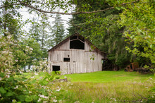 Old Wooden Barn And Vintage Tr...