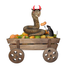 The Beige Cat Snake With Devil...