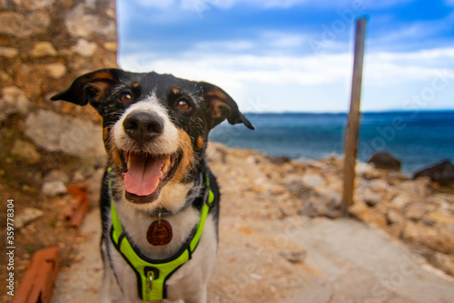 free dog posing in nature with mountains around Canvas Print