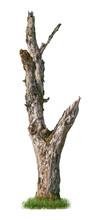 Cut Out Tree Trunk. Dead Tree ...