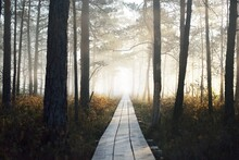A Wooden Pathway Trough The Co...