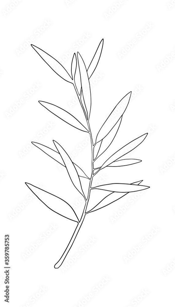 Obraz Vector sketch of olive tree branch. Hand drawn line art. Outline drawing illustration fototapeta, plakat