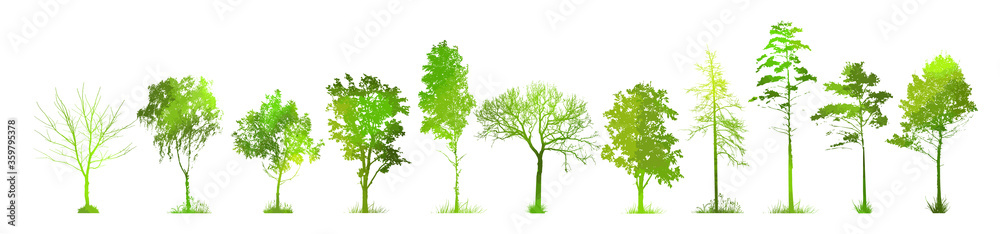 Fototapeta A set of silhouettes of trees. Picturesque green landscape. Mixed media. Vector illustration
