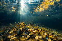 Autumn Leaves Shining Underwater