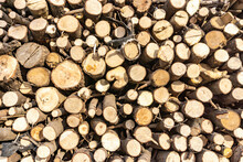 Stack Of Sawn Logs. Natural Wooden Decor Background.