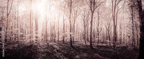 Beech forest in spring by soft light
