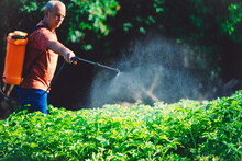 Farmer Spraying Pesticide Over...