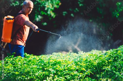 Farmer spraying pesticide over crops in a vegetable garden Fototapeta