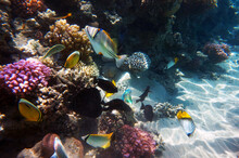 Coral Reef In Egypt, Makadi Bay