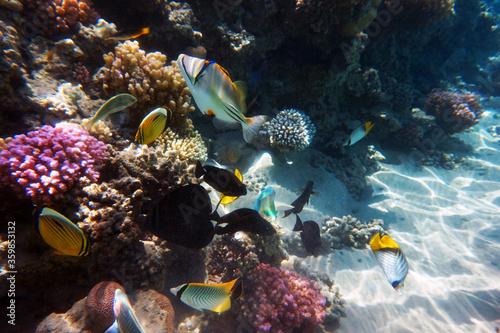 coral reef in Egypt, Makadi Bay Wallpaper Mural
