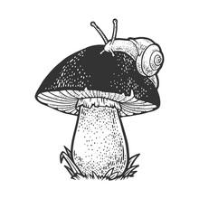 Snail Crawling On Mushroom Ske...
