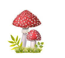 Two Watercolor Redcap Fly Agar...