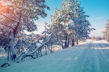 Snowy Pine Trees On The Side O...