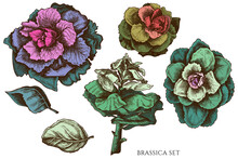 Vector Set Of Hand Drawn Color...