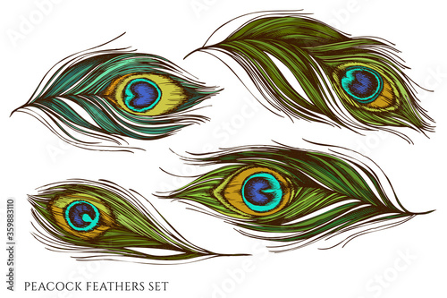 Carta da parati Vector set of hand drawn colored peacock feathers