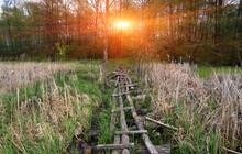 Log Bridge Across The Swamp In...