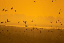 Scenic View Of Flock Of Birds ...