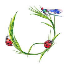 Wreath Of Summer Lawn Plants With Insects. Round Frame Of Green Grass With Ladybug And Dragonfly. Watercolor Hand Painted Isolated Elements On White Background.