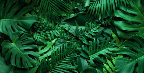 closeup nature view of tropical green monstera leaf and palms background. Flat lay, fresh wallpaper banner concept