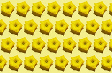 Pattern Of Rows Of Yellow Flower Heads