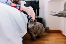 Cat In Bedroom With Feet Of Yo...