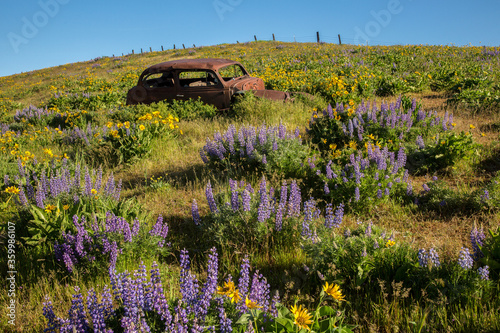 A vintage, rusted car and balsam root and lupine flowers in the Columbia Hills S Wallpaper Mural