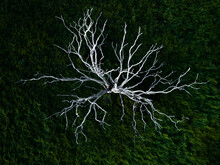 Overhead View Of Dead Tree On Grassy Landscape