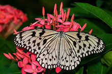 """""""Paper Kite Butterfly"""""""