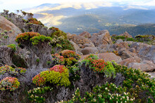 Native Plant Life On Summit Of...