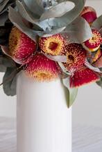 White Vase Of Eucalyptus Macro...