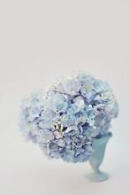 Vase Of Blue Hydrangea