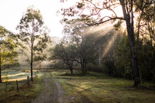 Early Morning Sunlight On The Farm