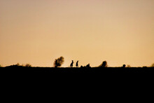 Boxing Kangaroos At Sunset