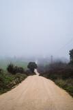 Foggy scene on rural unsealed road