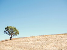 Tree On A Hill With A Blue Sky