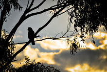 Silhouetted Bird Perched On A ...