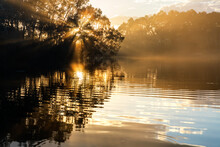 Sun Rays Through Gum Trees In ...