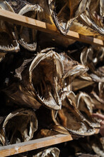Dried Fish With Open Mouth