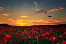 Lest We Forget, Poppy Field With With WW11 Planes Flying Across As The Sun Goes Down.Remembrance Day, Anzac Day Tribute To The Fallen.