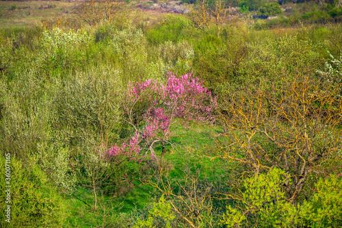 Fototapeta Spring flowers trees obraz na płótnie