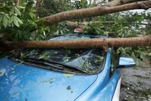Broken Tree Fallen On Top Of P...